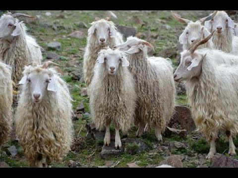 Новогодний костюм Козы 2015 и Овцы на фото Модные платья