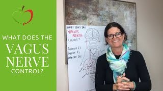 What Does the VAGUS NERVE Control?