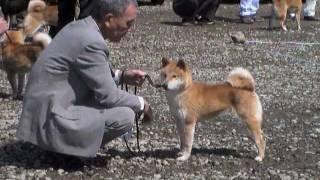 美喜号-大野ギオン荘 19970318-20090906 湘南美雅荘の基礎犬