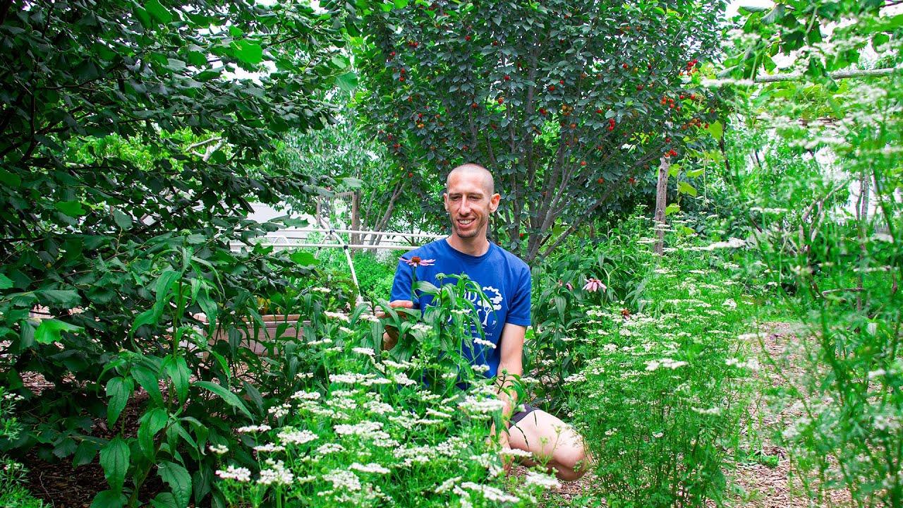 Over 35 Edible Perennials in a Backyard Garden, Fruits You Have NEVER Seen!