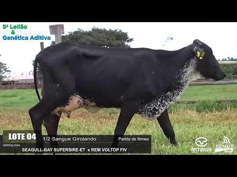 LOTE 04 - REM GALEGA - REM0316 - 0889-AU - 5º LEILÃO GIR E GIROLANDO GENÉTICA ADITIVA
