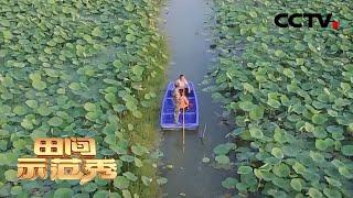《田间示范秀》水里求财花样多 20200521 | CCTV农业