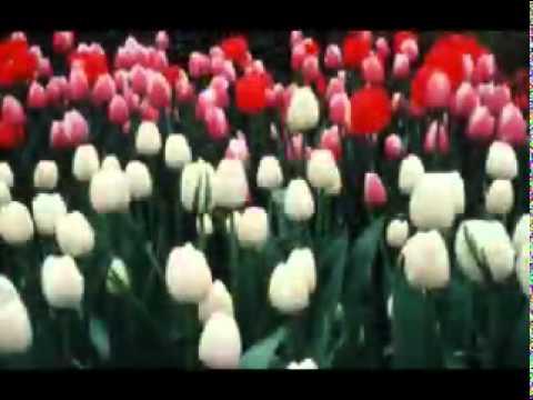 YouTube   Aokra Dedanona by Mudassir Zaman   MP4   MPEG 4 Video
