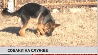 Собаки на службе. Новости. GuberniaTV