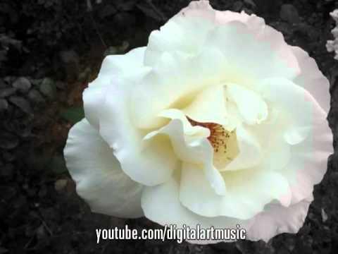 Концертное видео: видео всех категорий смотреть онлайн или