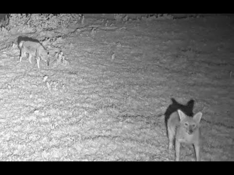 Cam1 Hula Nature Reserve|Israel Nature & Parks Authority|The Charter Group Of Wildlife Ecology