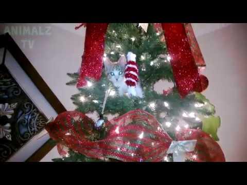 Tannenbaum Lustig.Katzen Gegen Tannenbaum Lustige Katzen Weihnachten Fällt Aus