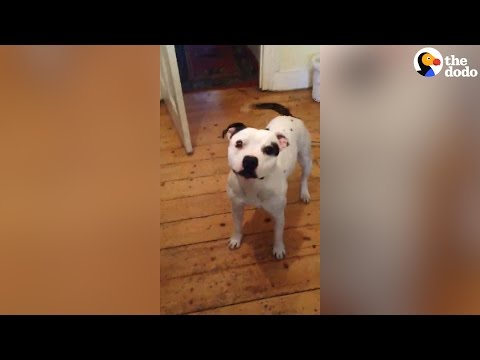 Smart Dog Is SO Excited For His Walk | The Dodo