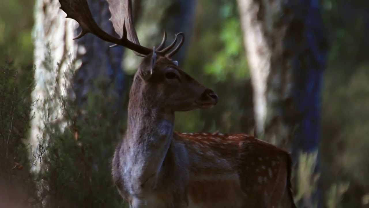 Rewilding Europe: the case of Western - Iberia (ENG)