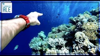 EGITTO/EGYPT documentario GoPro adventure - Cool Life by Alessandro Marras