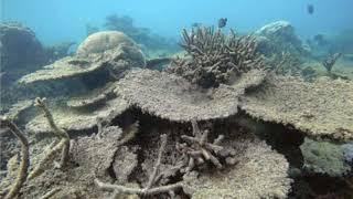 ¿Qué es la acidificación del Mar?
