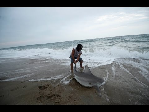 Shark Fishing In South Bethany Beach