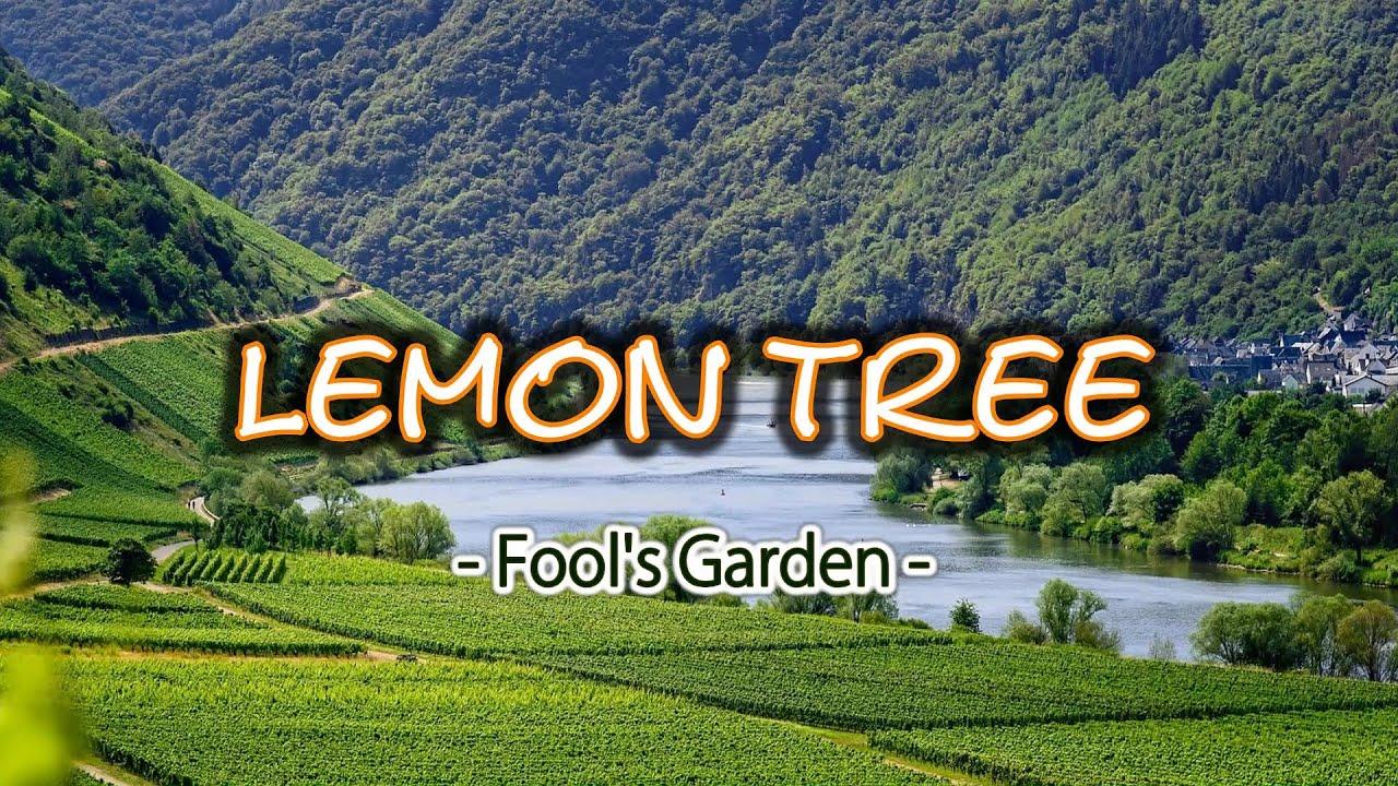 Lemon Tree by Fools Garden (acoustic reggae cover) Smiger Ga-H15
