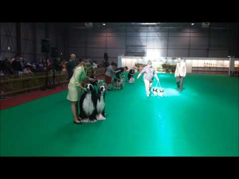Prague Expo Dog 16.4.2017 - Best Couple, Judge: Otakar Vondrouš / CZ