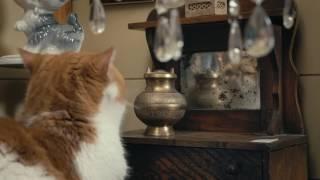 IAMS® Presents: Senior Cats Go Antiquing