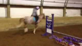strawberry roan pony jumping 2