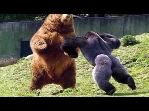 【驚愕】カメラが捉えた動物バトル映像 Top10 Youtube
