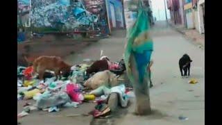 ¡Ladridos de ayuda! Preocupante panorama de perros abandonados en Ciudad Bolívar