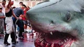 اكبر سمكه قرش في العالم  (megalodon)