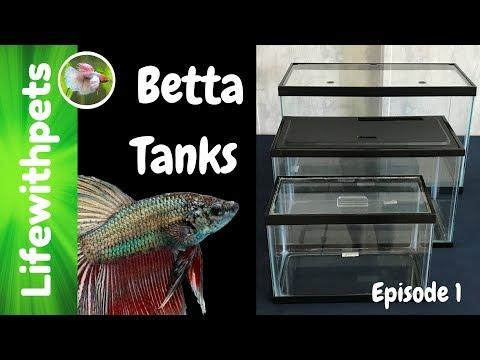 Choosing a Betta Fish Tank (Episode 1)