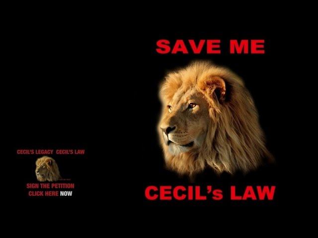 Brian May & Kerry Ellis — Born Free (Cecil's Version)