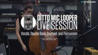 Ditto Mic Looper - Live Session with Vocals, Double Bass, Trumpet, and Percussion
