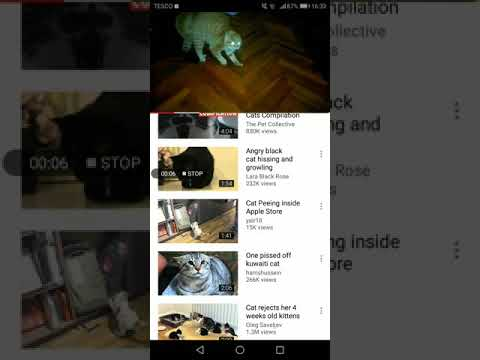 Scared cats video higher speed rate You will laugh hard