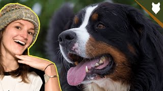 ARE BERNESE MOUNTAIN DOG GOOD FOR FIRST TIME OWNERS