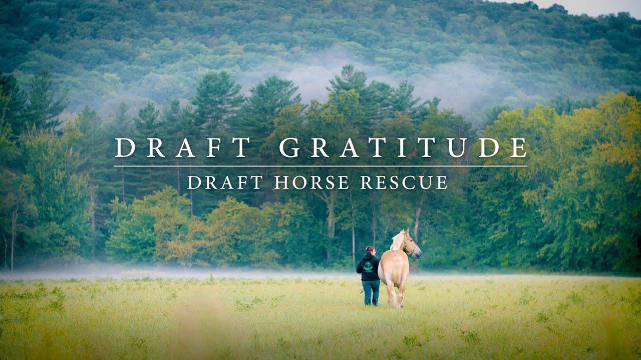 Draft Gratitude :: A NonProfit Draft Horse Rescue – Saving Draft