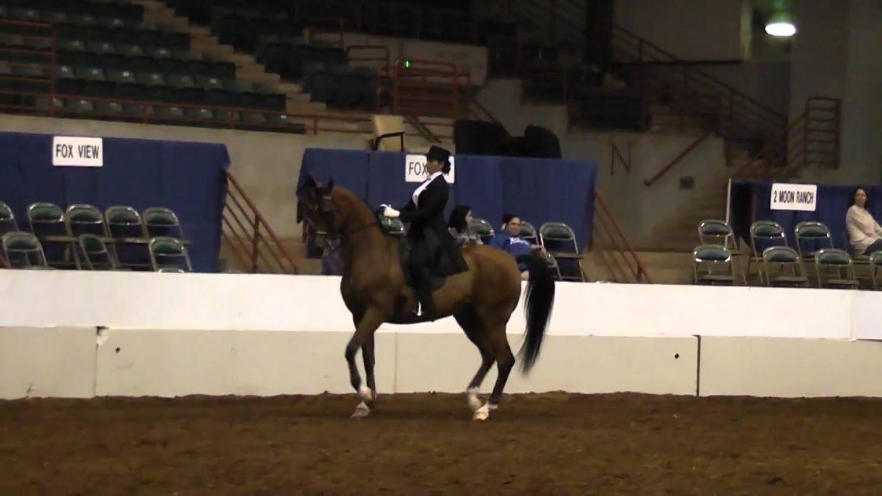 Regionals 2011 Saddleseat Equitation Pattern Izzy Rearing Youtube