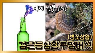 대구 야생버섯 산행 검은등상황구멍버섯(병꽃상황) CUT…
