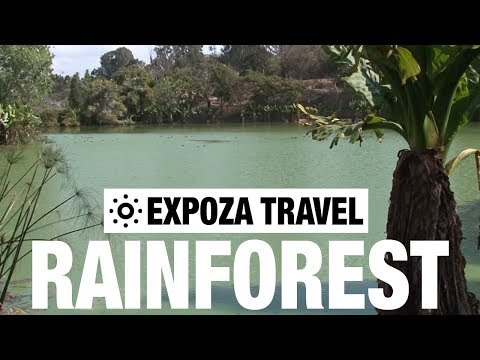 rainforest-(madagascar)-vacation-travel-video-guide