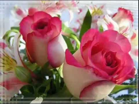 нежная песня поздравления с днем рождения и много роз!! - Познавательные и прикольные видеоролики