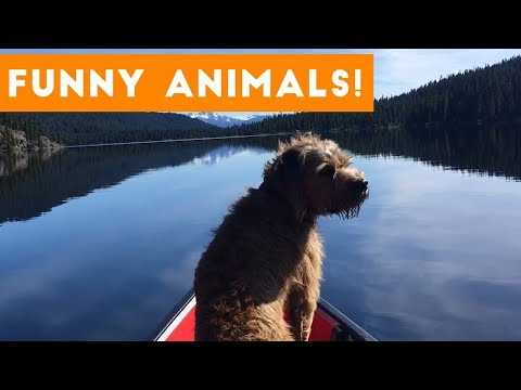 Funniest Pets of the Week Compilation September 2017 | Funny Pet Videos
