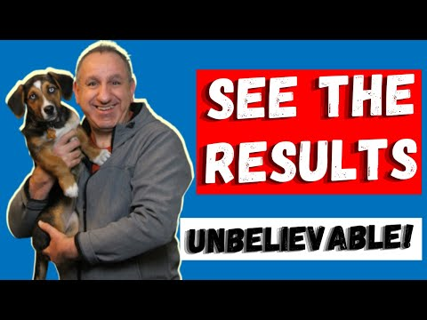 Leaving dogs home alone - Should you do it? from YouTube · Duration:  5 minutes 53 seconds