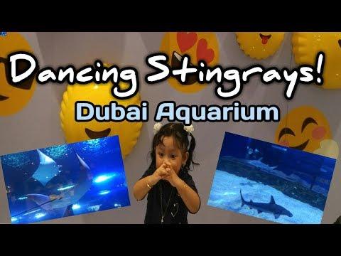 Dancing Stingrays| Dubai Mall Aquarium and Underwater Zoo | Human Waterfalls Dubai