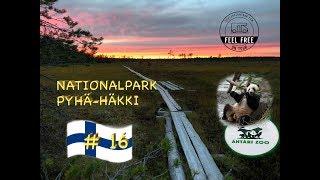 Begegnung mit Pandabären & Abenteuer im Nationalpark - Finnland Wohnmobil Rundreise #16
