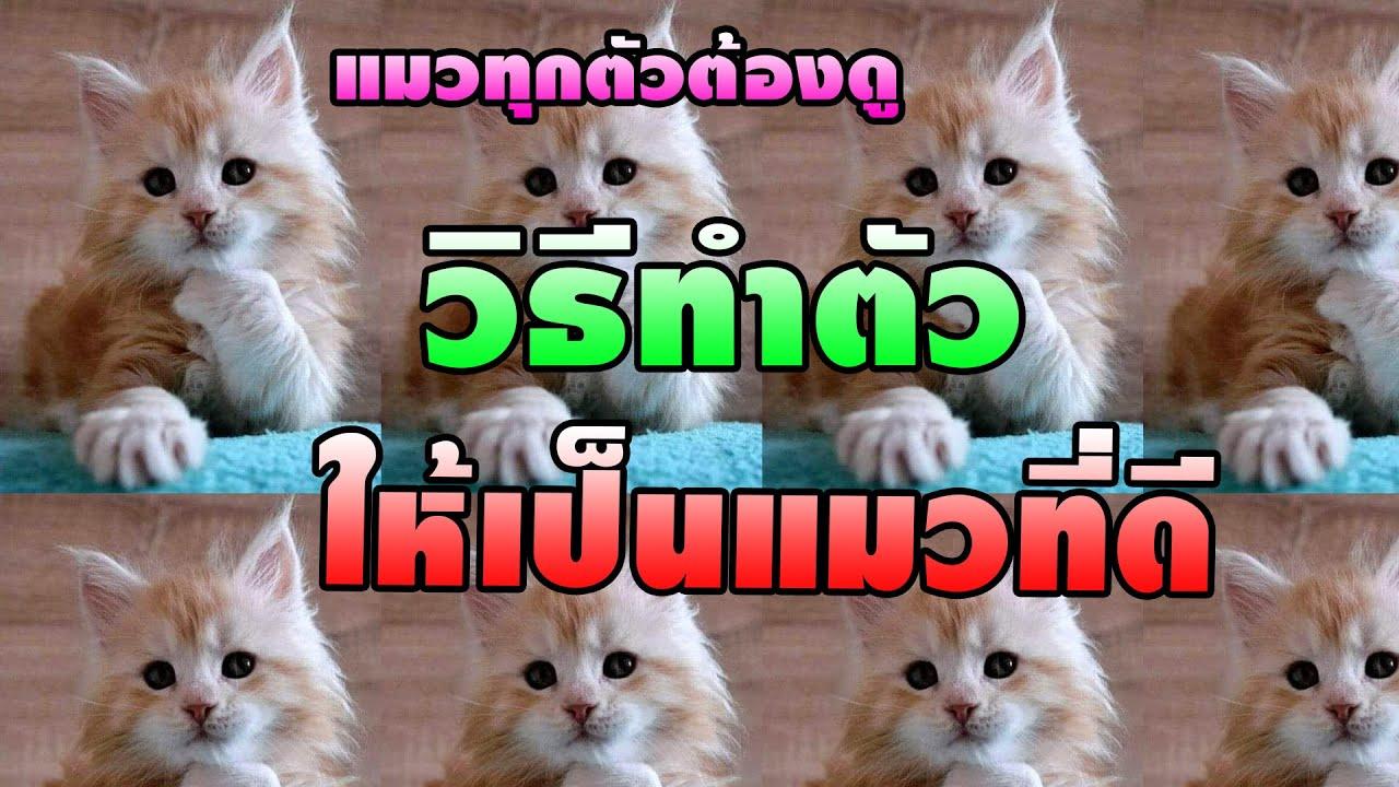 แมวทุกตัวต้องได้ดู วิธีทำตัวให้มีประโยชน์  น้องช่วยเหลืองานบ้านได้ทุกอย่างนะ
