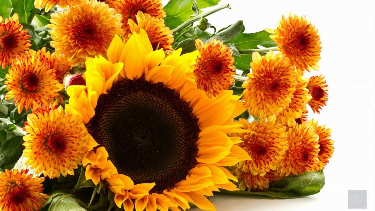 Цветы открытки с днем осени, прикол про