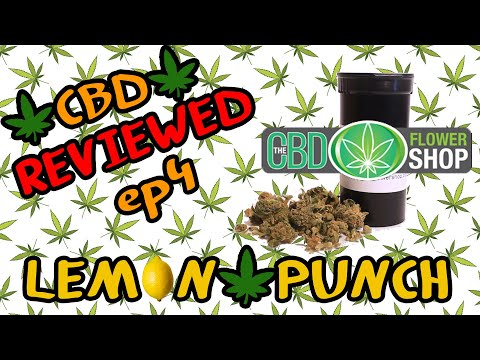 Honest Hemp Reviews EP 4 - LEMON PUNCH// CBD FLOWER SHOP