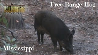 Bow hunted Free Range HOG in MS see how we hunt wild hogs with bow & arrow