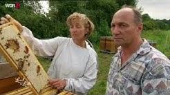 WDR   Land und lecker   Fleißige Bienen aus Brakel