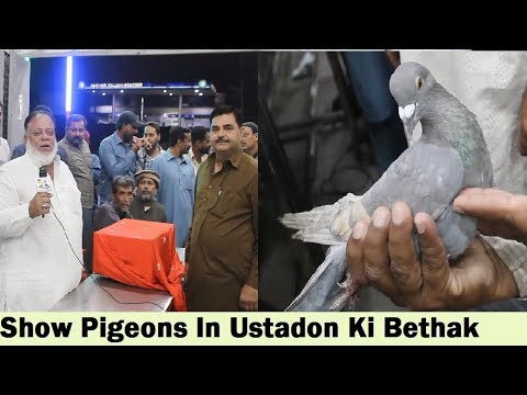 Karachi Kings Pigeon Association - Kabootar Ustadon Ki Bethak - 2nd