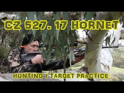 17 Hornet In The 527 CZ (483 Yards)