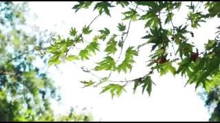Antalya. Dügün hikayesi Mesut ve gulnara свадебная история Анталия Месут и Гульнара