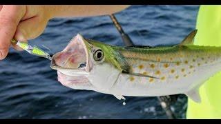 Рыбалка во Флориде. Скумбрия, камбала и крокодил. Часть первая.