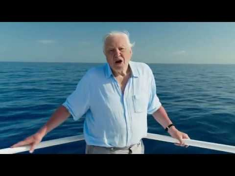 Blue Planet II Opening Intro Titles Episode 1 (HD)