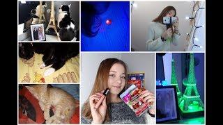 1 winter vlog (część 2) nowe kotki ?!