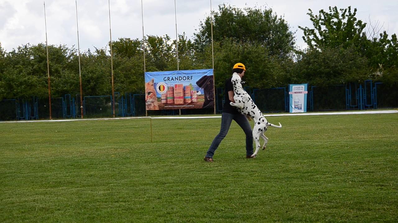 Шведченко Ангелина и далматин Вик. Класс дебют фристайл, 2 место