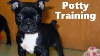 How To Potty Train A Bugg Puppy - Bug House Training Tips - Housebreaking Bugg Puppies Fast & Easy